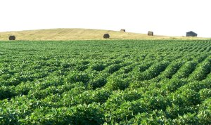 Farm, Find A Farm, Farm Realtor, Find A Farm Realtor, Real Estate Agent Farm
